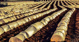 قیمت روز انواع نایلون کشاورزی