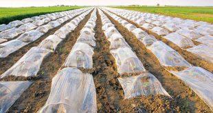 قیمت روز نایلون کشاورزی کیلویی یزد