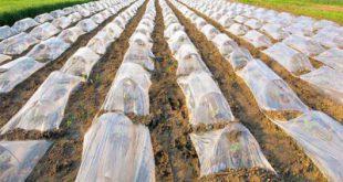 فروش انواع نایلون های کشاورزی به قیمت مستقیم