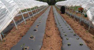 قیمت تولید نایلون کشاورزی یزد