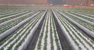 نایلون کشاورزی تبریز به قیمت کارخانه