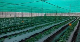 نایلون کشاورزی تبریز با قیمت استثنایی