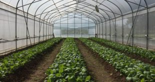 قیمت انواع نایلون کشاورزی به صورت مستقیم