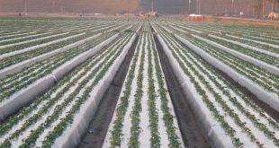 تولید نایلون عریض کشاورزی